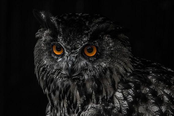Portret van een uil van Pureframed Photos