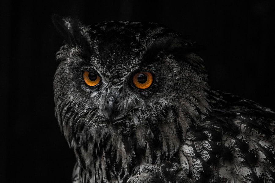 Portret van een uil