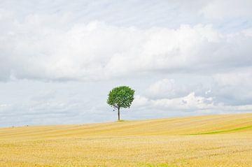 Eenzame boom von Wim van der Geest