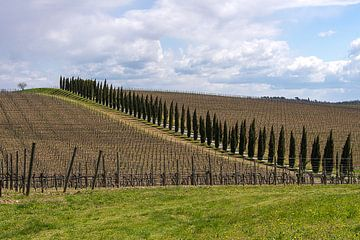 Chianti wijngaarden en Toscaanse cypressen van Guy Lambrechts