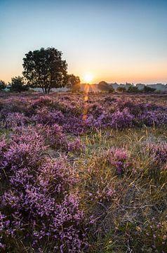 De Hilversumse Heide bij zonsopkomst 1 van Emile Kaihatu