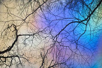 Bomen reflecteren in het water van Barbara Brolsma