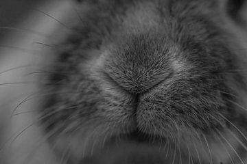 konijnen neus van Mika Leinders