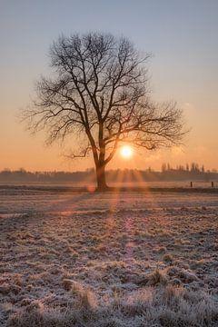 Zonopkomst in besneeuwd landschap van Moetwil en van Dijk - Fotografie