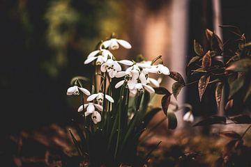Blumen Teil 58 von Tania Perneel