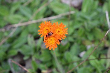 3 Felle bloemen van Bas Dijk