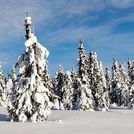 Besneeuwde bomen in Noorwegen van Jessica Arends