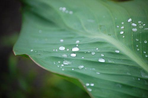 Waterdruppels op een blad