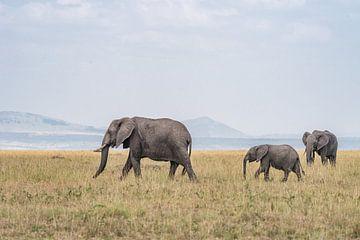 Een familie olifanten van Jessica Blokland van Diën