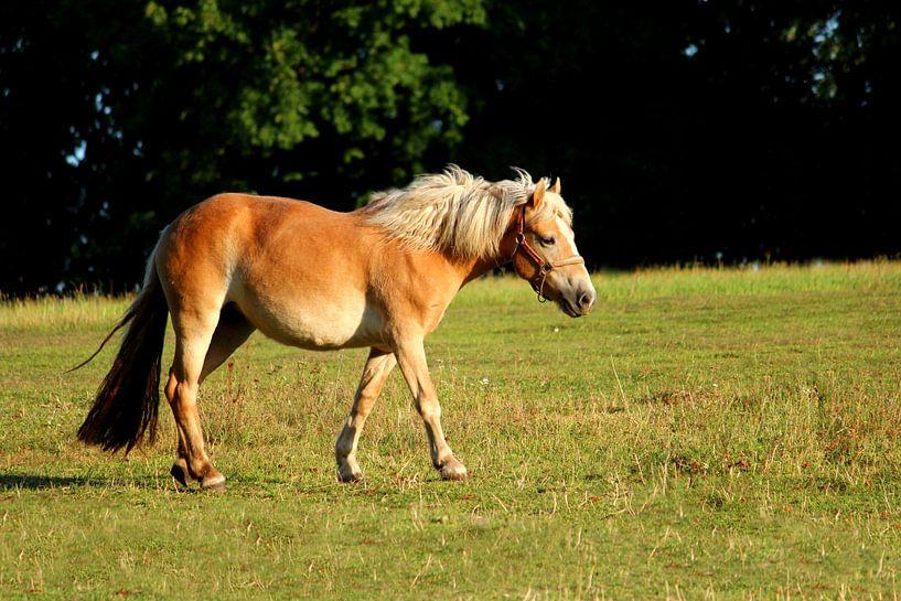 Pferd van Heike Hultsch