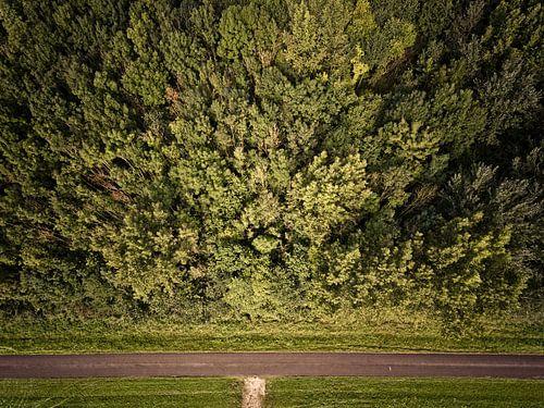 Bomen en een straat