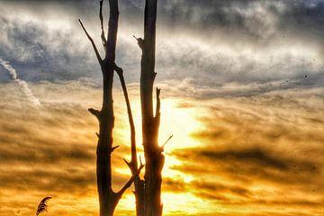 dode bomen van Cor Woudstra