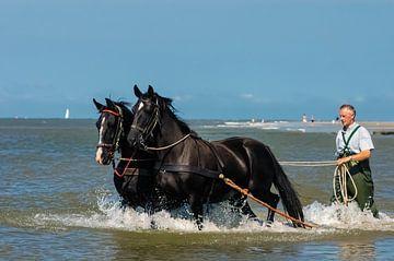 Paarden in de zee bij Ameland van Brian Morgan
