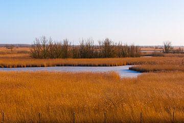 Landscape.Polder van Brian Morgan
