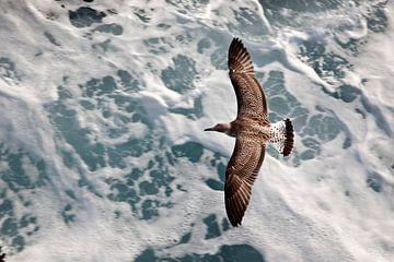 Mouette volant au-dessus des vagues sauvages de la mer Méditerranée en Grèce