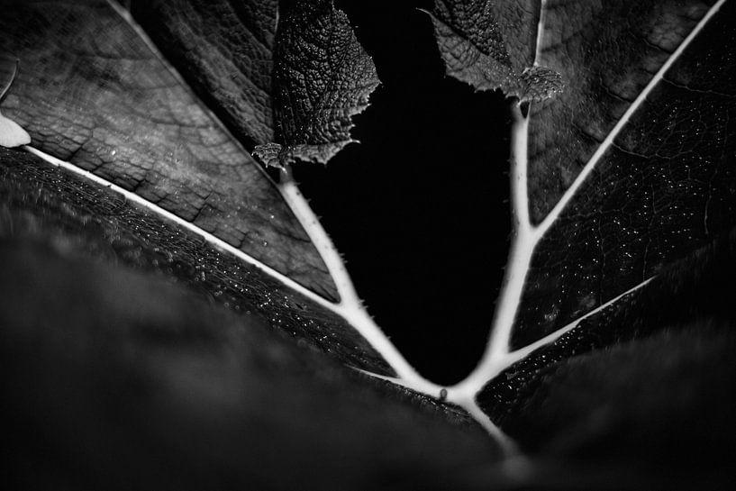 Abstrakte Pflanzen und Blätter von Rene  den Engelsman
