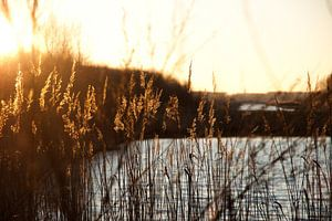 Zonsondergang door riet