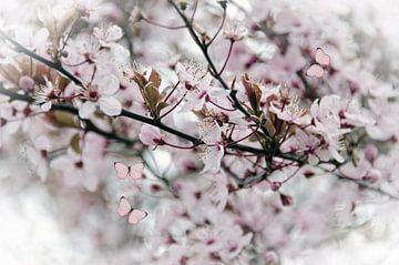 Rosa Blütenschmetterlinge von