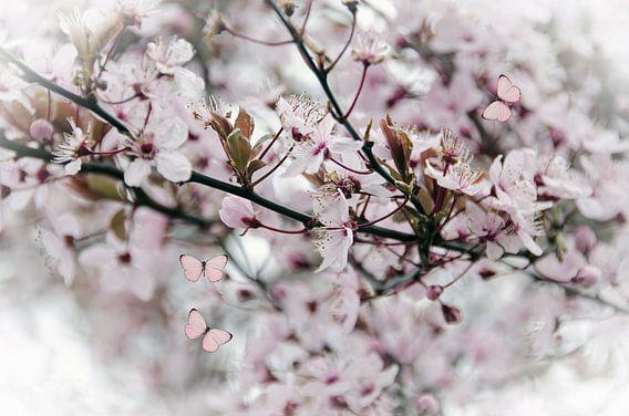 Roze bloesem vlinders