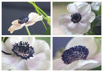 4 Mal Anemone von Jolanda van Eek