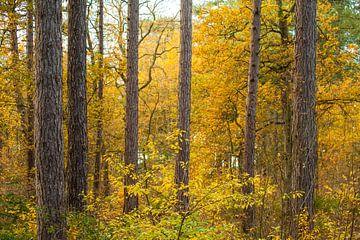 Bomen in de herfst van Margreet Frowijn