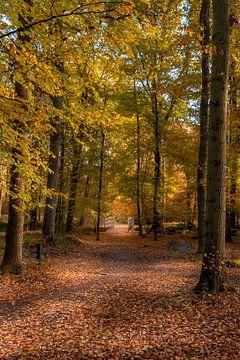 Waldweg im Herbst mit Brücke von John van de Gazelle