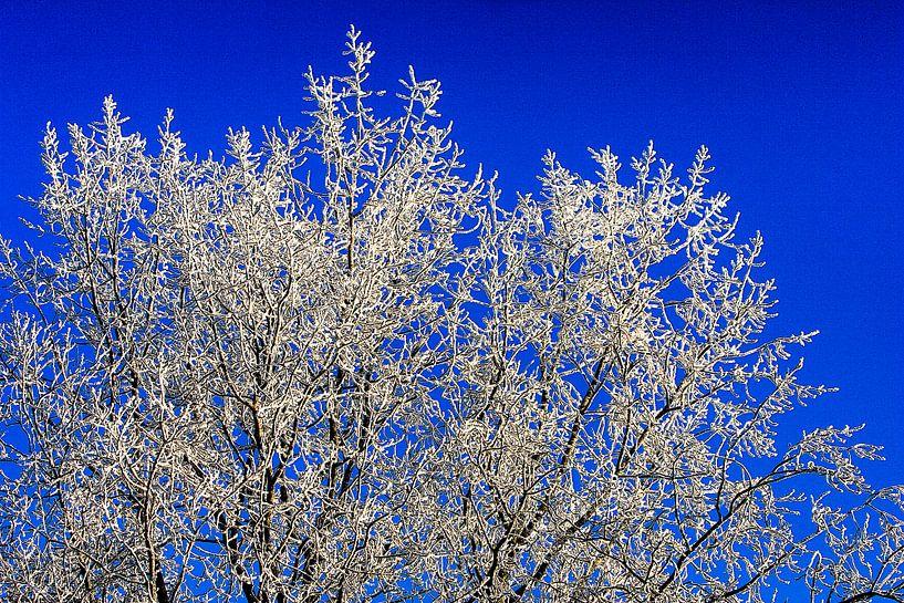 Besneeuwde boomtoppen van Paul Teixeira