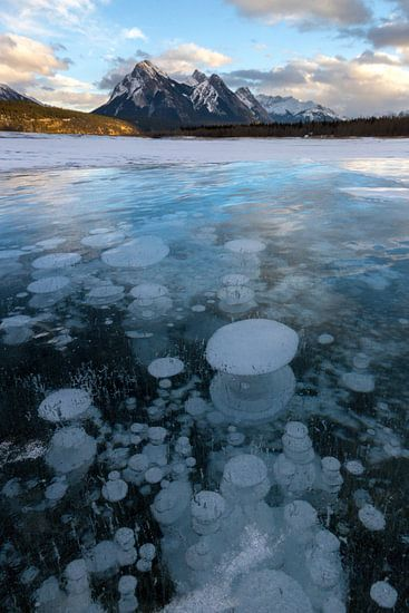 Methaanbubbels in Lake Abraham, Rocky Mountains