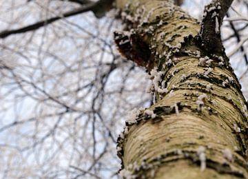 Stam van een boom in winterse sferen