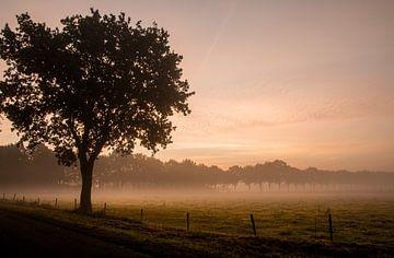 Ochtendmist met zonsopkomst in de herfst von Saskia Smulders