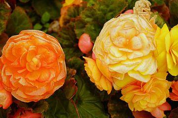 gelbe und orange farbene Blüten von Babetts Bildergalerie