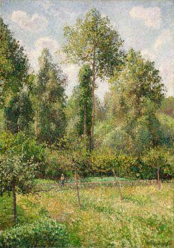 Camille Pissarro-Poplars, 201;- ragny