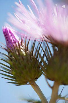 Design by nature (9102) van Tot Kijk fotografie: natuur aan de muur