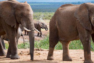 Watersproeiende olifant van Jack Koning
