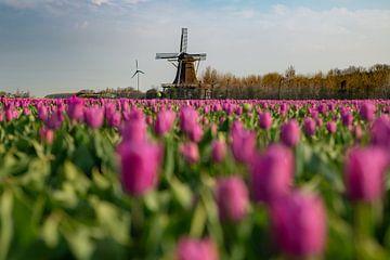 Holländisches Bild von Roelinda Tip