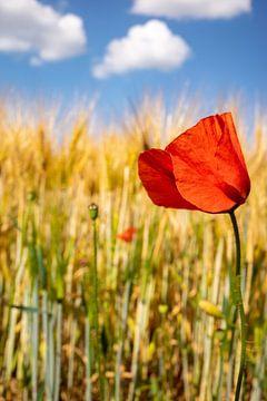Mohn in einem Getreidefeld von Remco-Daniël Gielen Photography