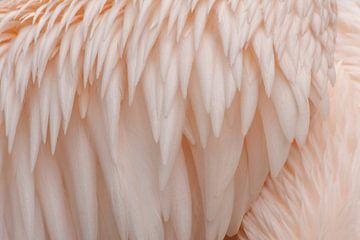Verenkleed pelikaan van Margreet Frowijn