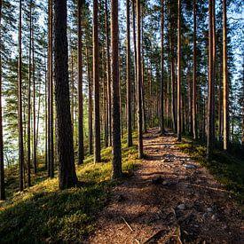 Path to freedom van Ellis Peeters