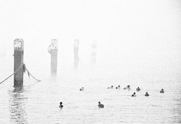 Eenden in de mist 1 van Jacqueline Koster