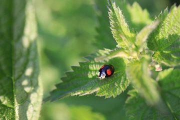 ' Lieveheersbeestje op groen blad van Olena Tselykh