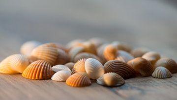 Muscheln von Marco Knies