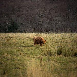 Highlander, Ben Nevis, Schottland von Bob Slagter
