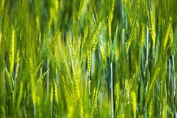 Gras von Frank Herrmann