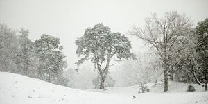 In de sneeuwbui van