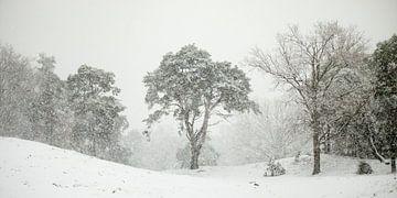 In de sneeuwbui von Nando Harmsen