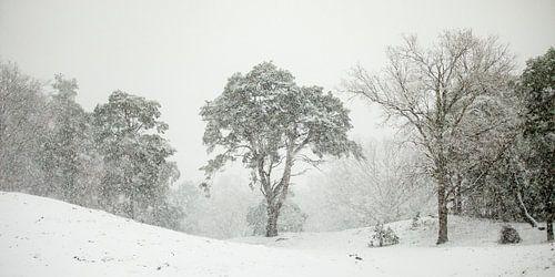 In de sneeuwbui