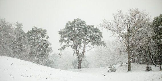 In de sneeuwbui van Nando Harmsen