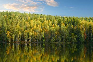 Meer in Zweden met reflectie van de bomen van Thomas Zacharias