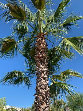 Belle photo de palmiers sur Ellen Van der Plas