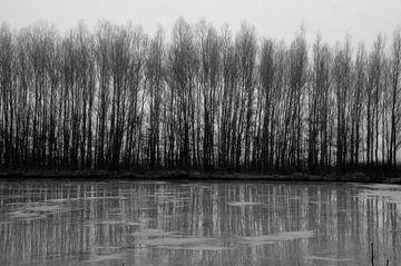 Bomen achter het water van Martin Baartmans